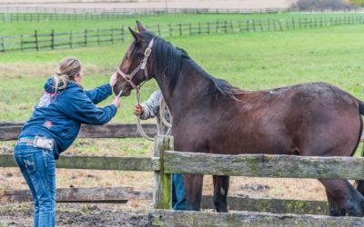 Parasite Control (Worming) for Your Horse