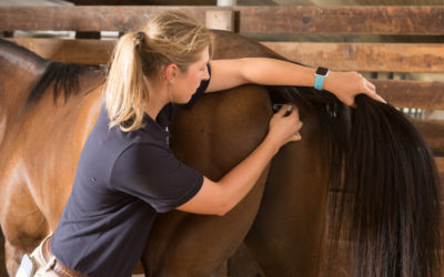 What All Horse Owners Should Know How to Do