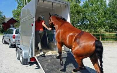 Emergency Horse Transportation/Hauling
