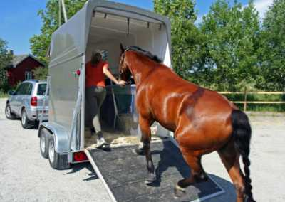 Emergency Horse Transportation/Hauling